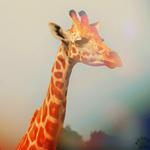 Смайлик Жираф пристально смотрит аватар