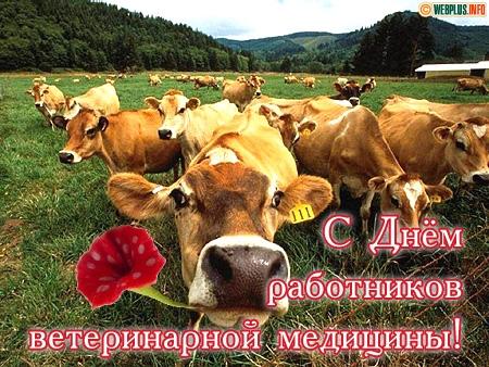 С днем работников ветеринарной медицины! Коровы с цветами смайлики картинки