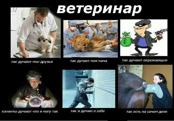 Открытки. С днем ветеринара! Ветеринар. Все как есть смайлики картинки