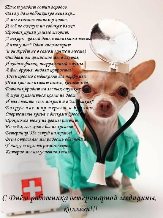 Официальное поздравление с днем ветеринара