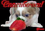 Смайлик Спасибочки! Собачка  с ягодкой клубничкой аватар