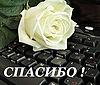 Картинка Спасибо! Роза белая на клавиатуре анимация