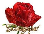 Благодарю! Бутон красной розы
