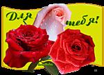 Картинка Для тебя! Две красные и розовая роза анимация