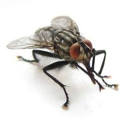 Ну муха погоди...