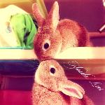 Картинка смайлик Два озорных кролика ...: liubavyshka.ru/photo/145-0-35072