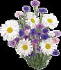 Букет полевых цветов. Ромашки, васильки