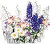 Букет полевых цветов. Ромашки, люпин, травы