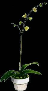 Гиф gif Распускается прекрасный цветок рисунок