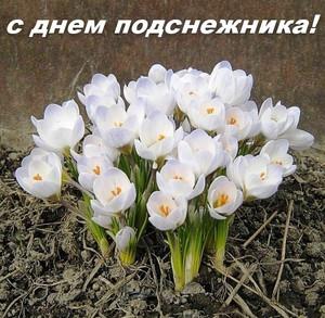Открытки. 19 апреля <b>С</b> днем <b>подснежника</b>! картинки смайлики