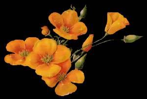 Гиф gif Оранжевая красота рисунок