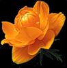 Картинка Распускающийся цветок анимация