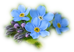 Смайлик Голубые цветы словно наши мечты аватар
