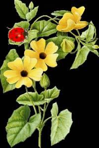 Гиф gif Жёлтые цветы с бабочкой рисунок