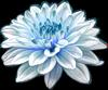 Нежная хризантема. Цветы
