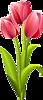 Три красных тюльпана. Цветы