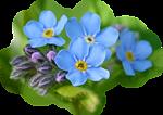 Голубые цветы словно наши мечты