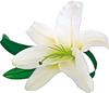 Смайлик Белая лилия для тебя аватар