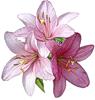 http://liubavyshka.ru/_ph/152/2/505152611.png