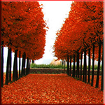 Смайлик Осень. Аллея с красной листвой аватар