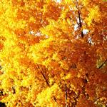 Смайлик Золотая осень!!! аватар