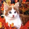 Котенок среди листвы смайлики картинки