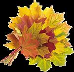 Букет кленовых листьев