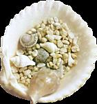 Смайлик Раковинка на берегу заполнена мескими ракушками аватар