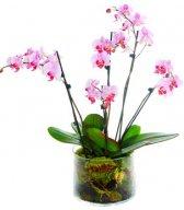 Смайлик Орхидея розовая аватар