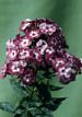 Картинка Такие разные букеты цветов! (4) анимация
