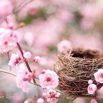 Гиф gif Цветы и птичье гнездо рисунок