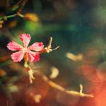 Цветочек смайлики картинки