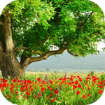 Дерево растёт на поляне маков