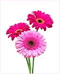 Цветы всегда радуют глаз