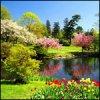 Цветы на фоне озера и деревьев