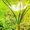 Белый цветок растет из земли