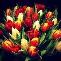 Букет тюльпанов красно-желтых