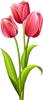 Гиф gif Три тюльпана рисунок