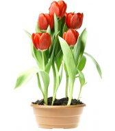 Смайлик Тюльпаны в горшке аватар