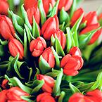 Гиф gif Букет красных тюльпанов рисунок