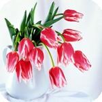 Букет тюльпанов смайлики картинки