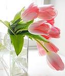 Тюльпаны для Жени