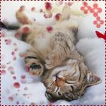 Гиф gif Спящий котенок видит сны рисунок