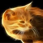 Картинка Рыжий кот (7) анимация