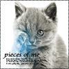 Гиф gif Котёночек рисунок