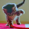 Смайлик Игривый котенок аватар