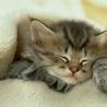Гиф gif Милый котенок рисунок