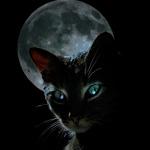 Котята картинки
