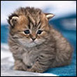Маленький котик