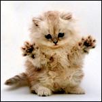 Котята смайлики картинки гифки анимации
